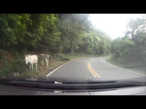 Driving in the US Virgin Islands - Cruz Bay to Coral Bay