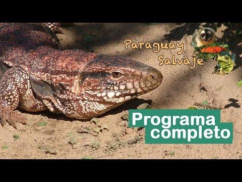 Paraguay Salvaje completo: El Magico Cerro Leon