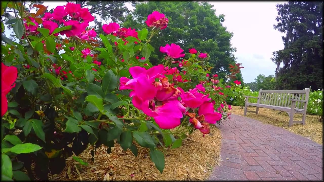 Coastal Botanical Garden Savannah Ga Youtube