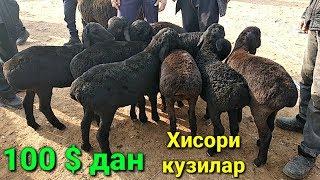 Ёш Хисори кузилар 100 дан сотилябди