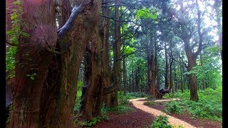 幻想の森   山形県最上郡戸沢村  4K空撮