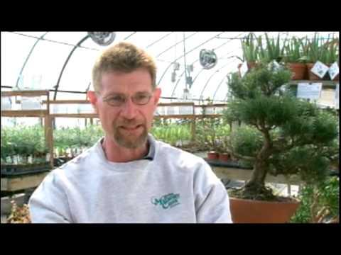 Mulberry Creek Herb Farm