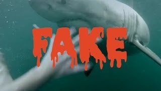 GoPro: *FAKE* Man Fights Off Great White Shark In Sydney Harbour