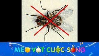 Mẹo đuổi và diệt ruồi cực hiệu quả