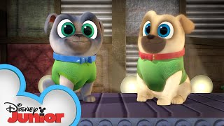 Project Funway | Puppy Dog Pals Puppy Playcare |  Disney Junior