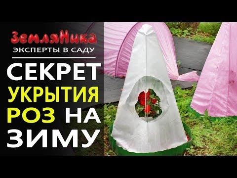 NEW! Секрет укрытия роз на зиму.