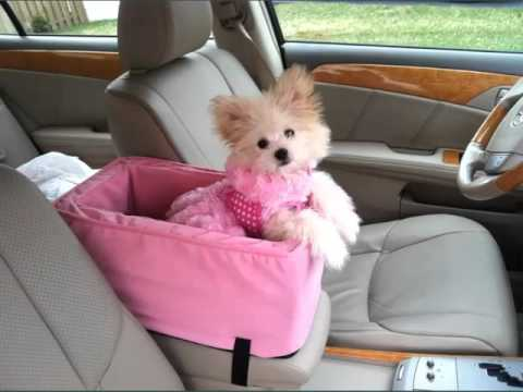 Dog Car Seat Carrier Set Of Picture Collection Ideas