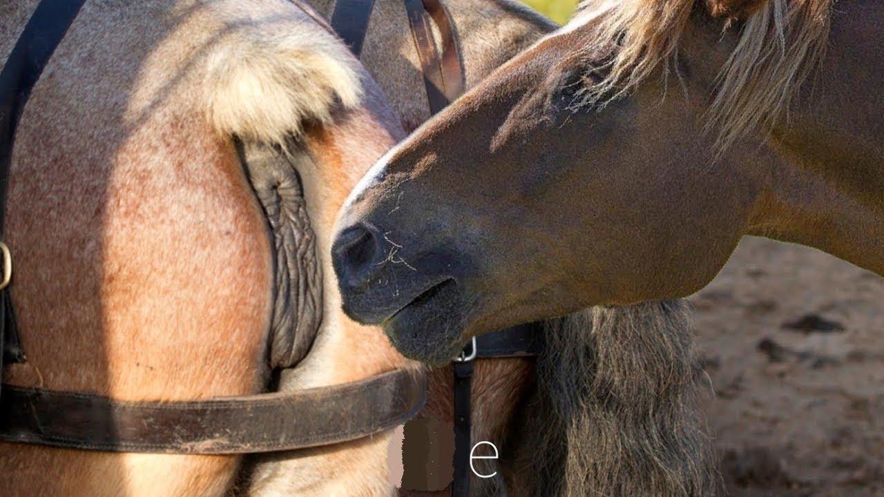 Youtube horse mating Newsflare
