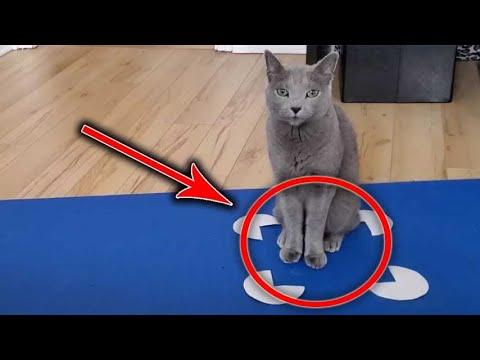 ¿Por què los gatos se ponen en los cuadros?