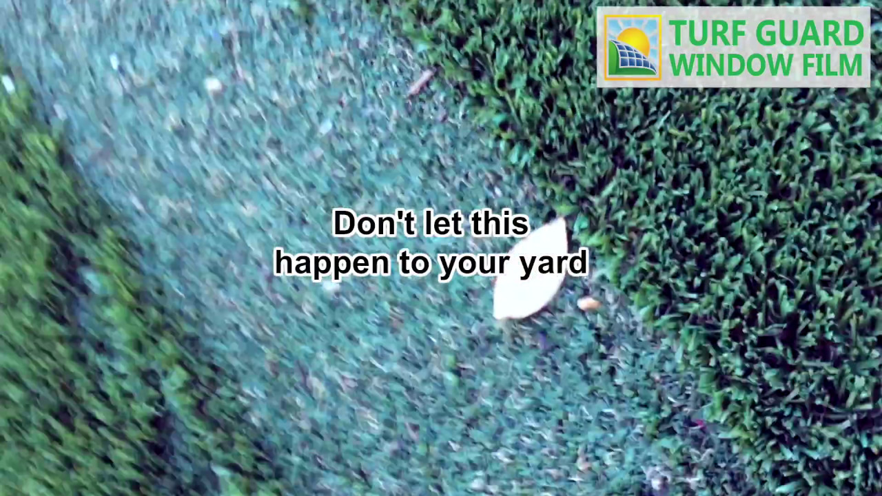 Artificial Grass Destroyed By Window Reflection Protect