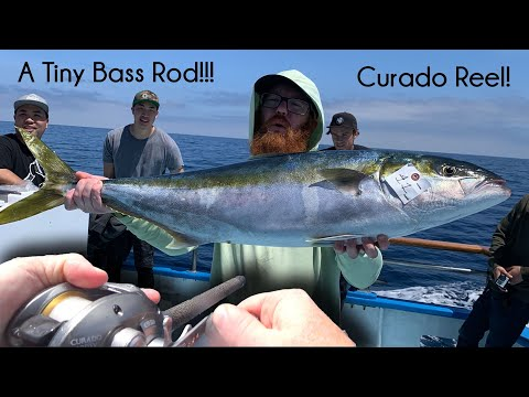 3 Huge YELLOWTAIL On Tiny BASS Reel! - Fishing Newport Landing - McFly Angler Episode 67