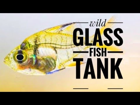 Glass Fish Tank