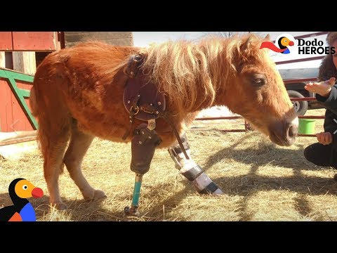 Mini Horse Who Lost Her Leg Is Pure Inspiration | Dodo Heroes Season 1