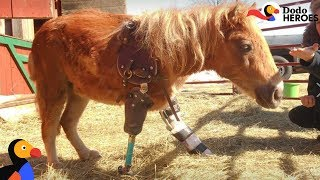 Mini Horse Who Lost Her Leg Is Pure Inspiration | Dodo Heroes Season 1