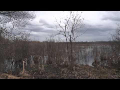 Боры Архангельск земля для многодетных семей ИЖС