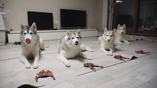 단체로 기다려 훈련하는 강아지들