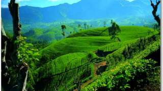 Lenka Filipová - V šálku čaje na Srí Lanku