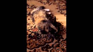 Котята балуются