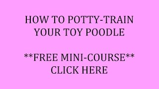 **Potty-Train a Toy Poodle-Free Course** Click Here !! POW