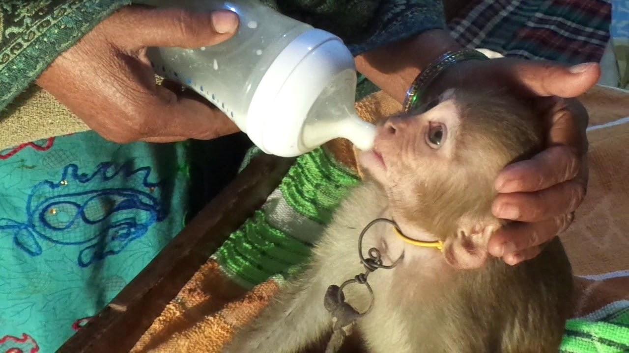 Baby Monkey Drinking Milk From A Bottle Youtube