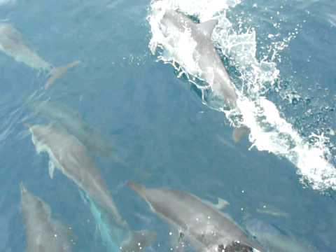 Taiwan dolphins