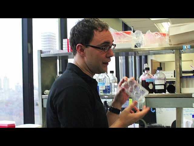 Dr. Benjamin tenOever: Profile of a Pew Scholar