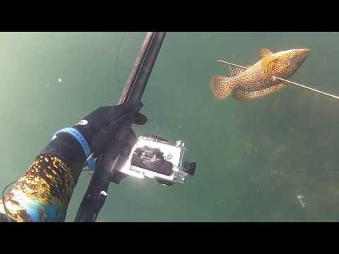chasse sous marine Piriac Sur Mer