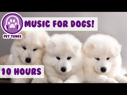 Anti Anxiety Music for Dogs! Cure Depression in Your Puppies! Help your Dog Relax!