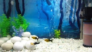 2ft aquarium setup