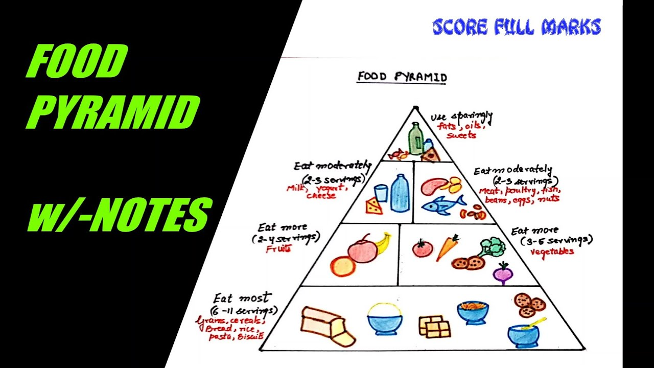 How To Draw And Color Food Pyramid Healthy Eating Balanced Diet W Notes Science Step By Step Youtube
