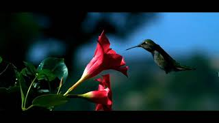 Beautiful Relaxing Hymns, Peaceful Instrumental Music, \\\x22Forest Morning