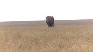 Осторожно, слон: школьницы из Кении придумали, как «помирить» диких животных и людей