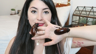 One of Emzotic's most viewed videos: Madagascan Hissing Cockroaches as Pets | Animal Care
