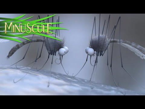 Minuscule - Season 2 (30 minutes Compilation) #5