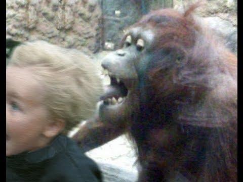 girl gets raped by monkey nude