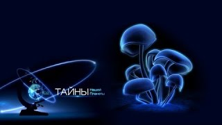 Когда грибы плачут Тайны нашей планеты (01.08.2015)