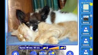 Игра Найди кота Одноклассники как пройти 431, 432, 433, 434, 435 уровень, ответы?