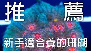 [水族系列ep5] 水族教學 | 推薦新手適合的十種珊瑚『CC字幕』Top 10 corals for beginner