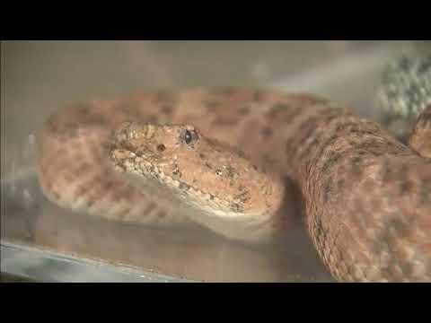 Bryan Hughes with Rattlesnake Safety Information ABC15 Phoenix Arizona