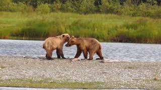 Katmai National Park Movie 2017