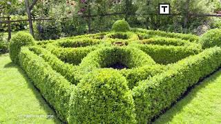 Topiary, czyli rzeźby z roślin