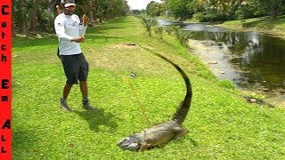Invasive Bowfishing **BIGGEST IGUANA EVER!**