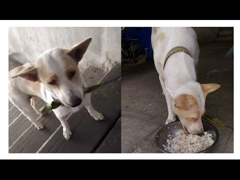 Stray Dog Keeps Bringing Gifts To A Woman That Fed Him And His Mother To Show His Appreciation!