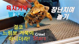 유난히 활발한 육지거북!!! [별거북]시즌2 아성체 #…