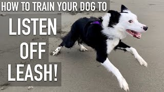 How To Train ANY DOG To Listen OFF LEASH!