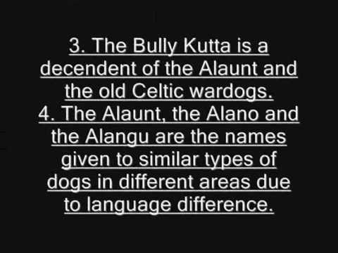 Origin Of The Bully Kutta By Wajahat