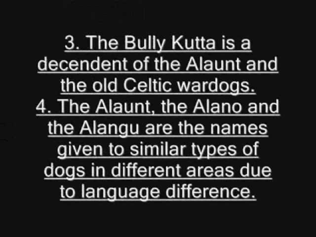 Origin of the Bully Kutta by Wajahat Travel Video