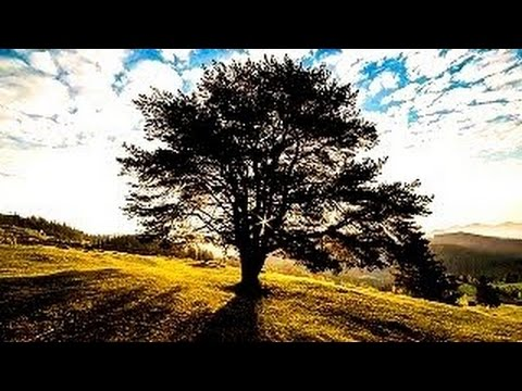 10 Strangest Trees On Earth