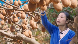 Chinese country girl made dried kiwi fruit and kiwi sugar | wild girl