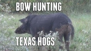 Bow Hunting a Big Hog
